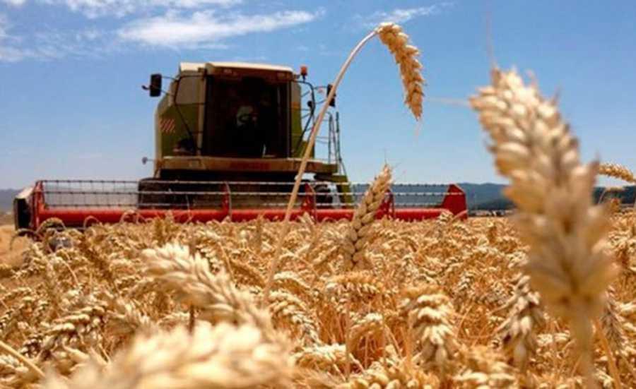 Cosechad e trigo